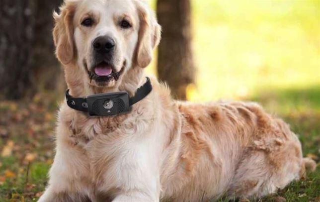 smartphone para perros 2