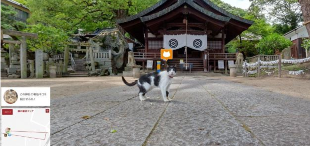 Cat Street View 3