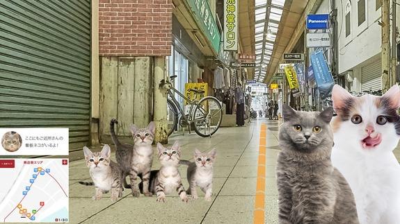 Cat Street View 4