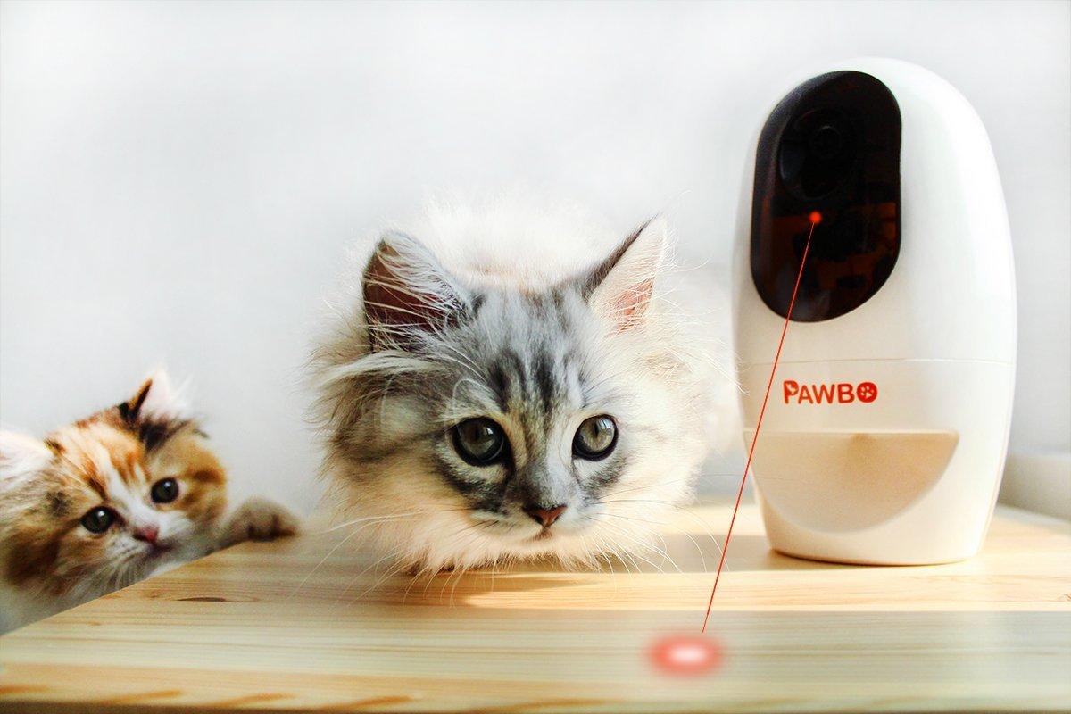 Pawbo+