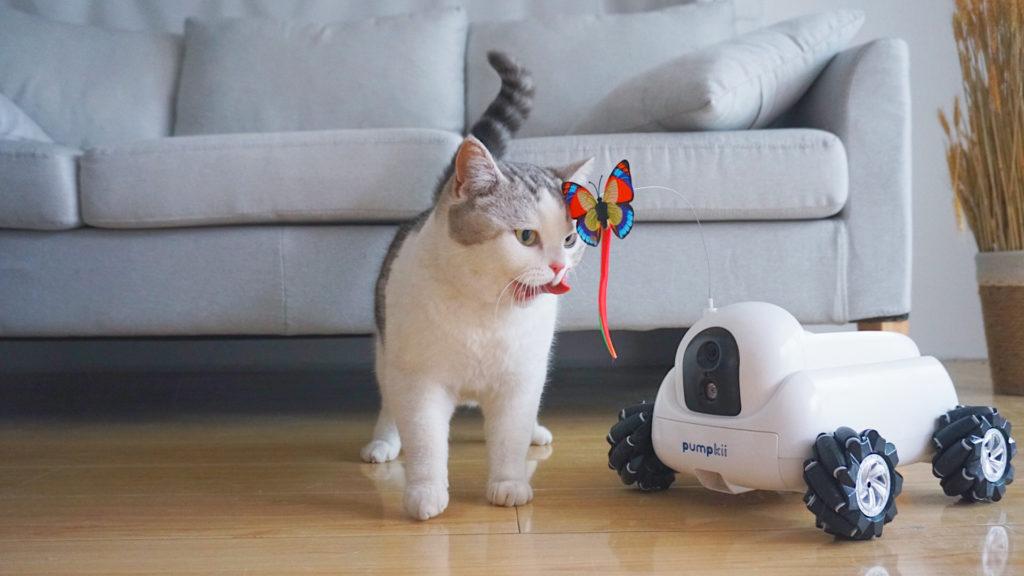 Pumkii - Distracción para las mascotas