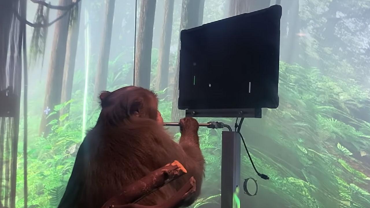 Neuralink muestra avances - permitir a un mono jugar Pong con la mente