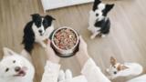 Dogfy Diet, ahora es posible comprar comida casera para nuestro perro