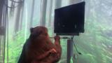 Neuralinkmuestraavances: Permitir a un mono jugarPongcon la mente