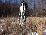 El robot humanoide Atlas ya es capaz de correr